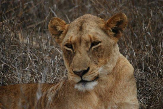 Royal Malewane : Unglaubliche Safari-Eindrücke!