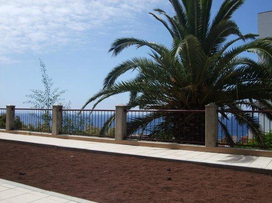 Umsicht 2 fotograf a de apartamentos pez azul puerto de la cruz tripadvisor - Apartamentos pez azul tenerife ...