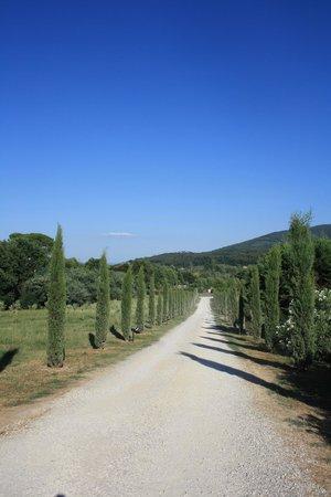Hotel Villa Cheli : Allée de cyprès qui mène à l'hôtel depuis la route