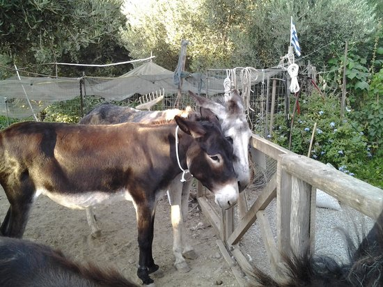 Agia Marina Donkey Rescue Sanctuary
