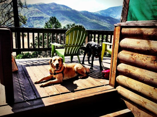 Elk Point Lodge & Cabins: The pups enjoying their accomodations