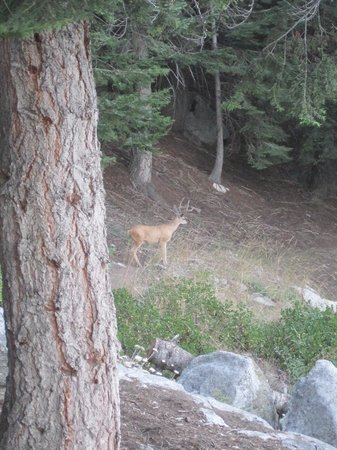 Bearpaw High Sierra Camp: Deer are in the camp each morning.