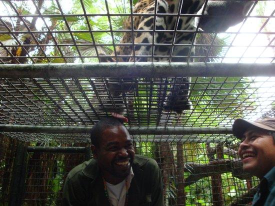 Black Orchid Resort: Tony feeding a Jaguar?