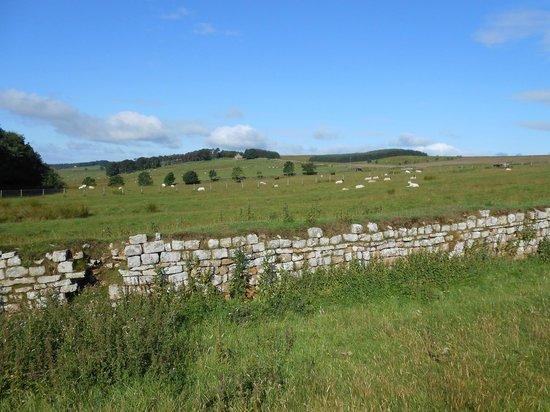 Burnhead Bed and Breakfast: Hadrian's Wall west of Burnhead