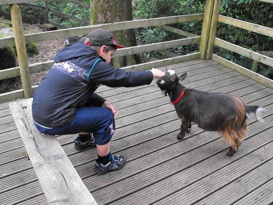 Becky Falls: Petting zoo