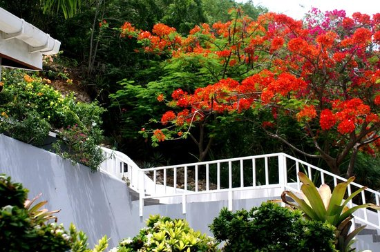 Blue Moon Antigua: Steps to villas