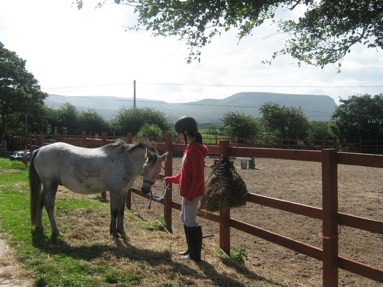 Island View Riding Stables And Riding School