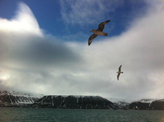 Radisson Blu Polar Hotel, Spitsbergen, Longyearbyen: Stormfåglarna följer skeppet