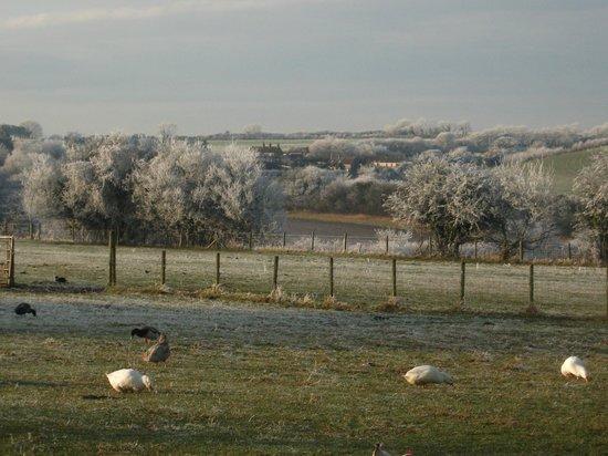 Follys End Farm Cafe: field in winter