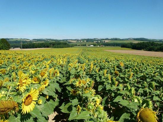 Domaine de Rambeau : Stunning views of the local countryside