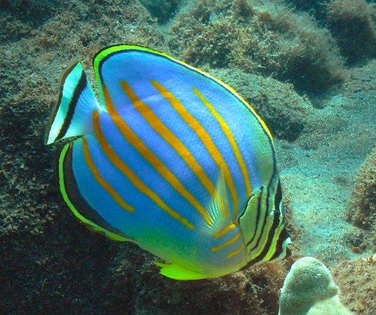 Aqua Adventures: beautiful fish and turtles