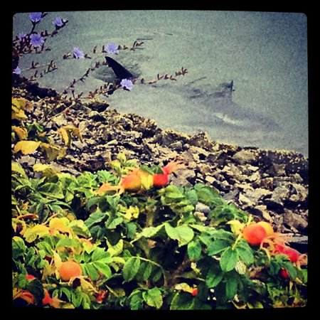 Hotel Bellwether: Shark in the water outside hotel