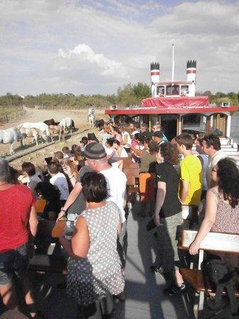 Tiki 3: Les touristes prennent en photo les taureaux