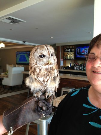 Omni La Costa Resort and Spa: Groovy the Resident Owl