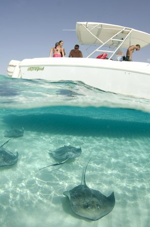 Cayman Private Charters : Leaving Stingray city