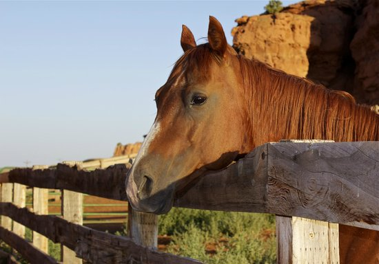 Red Reflet Ranch: The corral