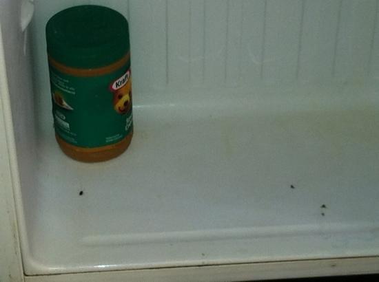 TRYP Cayo Coco: frigo: chaque matin nous trouvions de nouveaux insectes morts à l'intérieur du frigo