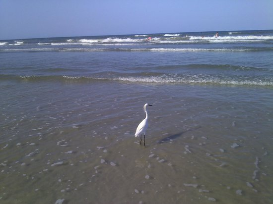 New Smyrna Town Beach: N. Smyrna Beach, Florida