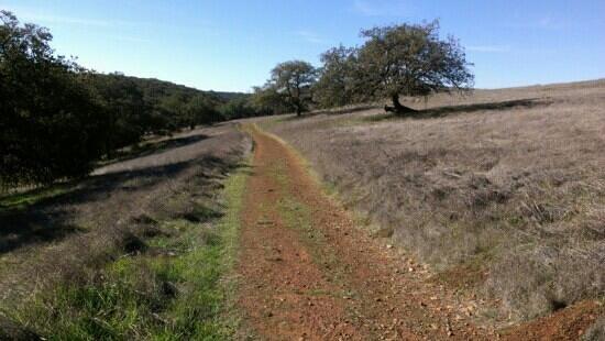 Santa Rosa Plateau Ecological Reserve: Early summer