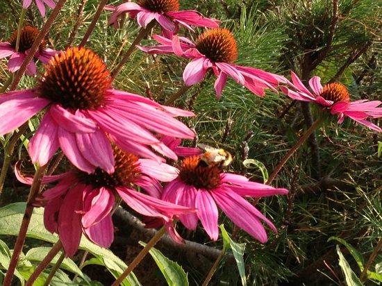 Wallowa Lake Resort: Wild flowers