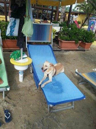 Merlibeach: skizzo in relax al fiko d'india