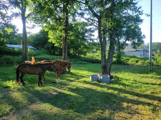 Kamoidake Onsen: 小さな牧場もある