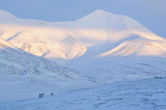 Green Dog Svalbard: Greendog Svalbard
