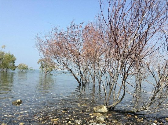 Kinar Holiday Village : Sea of Galilee near to Kinar Classic Hotel