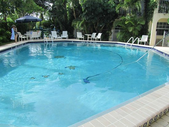 The Caribbean Court Boutique Hotel: Piscina