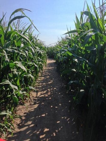 Southwold Maize Maze - TEMPORARILY CLOSED