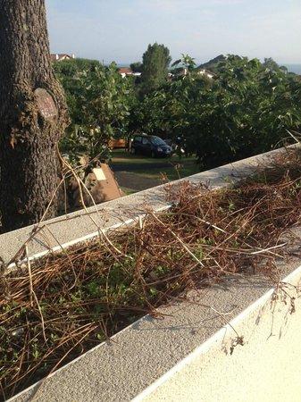 Villa Mayarko Lafitenia Resort: Plantes fanées