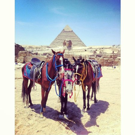 Go Travel Egypt - Day Tours : The breath taking pyramids and excitable locals