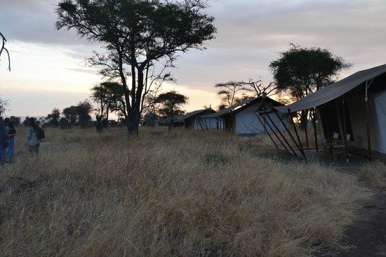 Nieleze Serengeti Camp: Tende