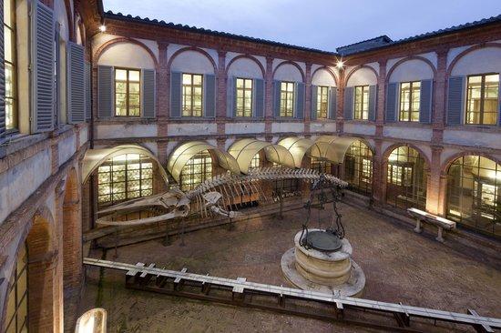 Museo di Storia Naturale dell'Accademia dei Fisiocritici