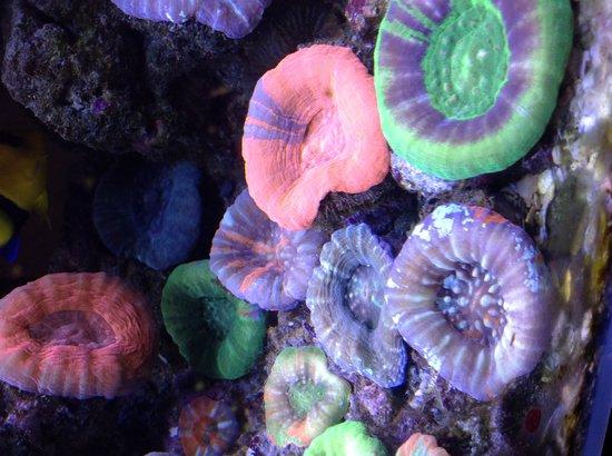 Sushi Hi: Reef tank