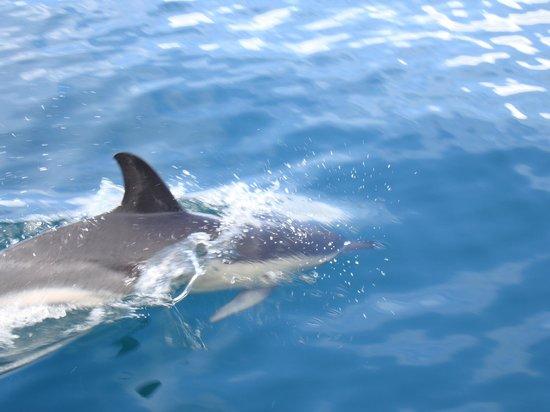 VitaSol Park: Dolphin Trip