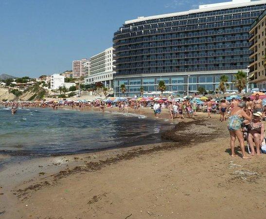 Playa Arenal-Bol : Situación de la peor zona de algas Playa Arenal Calpe 220813