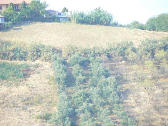 Agriturismo Il Borgo Degli Ulivi: panorama