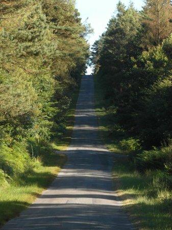 Brocéliande : Strada nel bosco