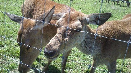 Domaine Du Bas Chalus : animaux