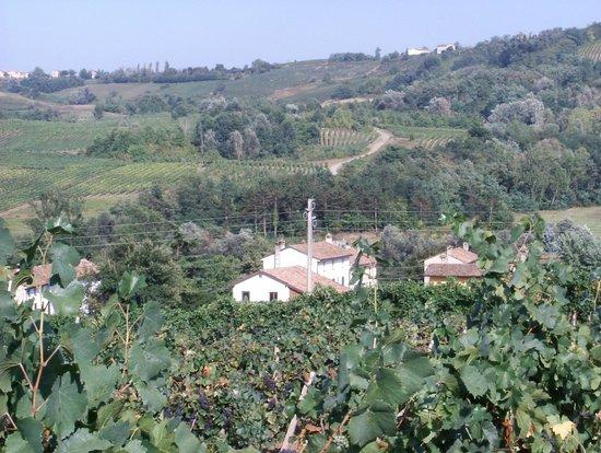 Santa Maria della Versa, Italy: la nostra azienda immersa tra le colline dell'Oltrepo Pavese