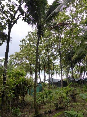 La Leona Eco Lodge : Het uitzicht vanuit de hut
