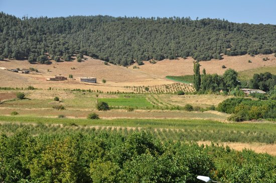 L'Auberge Berbere: Vue de la chambre