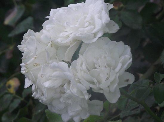 Jacaranda B&B : Scatti del giardino