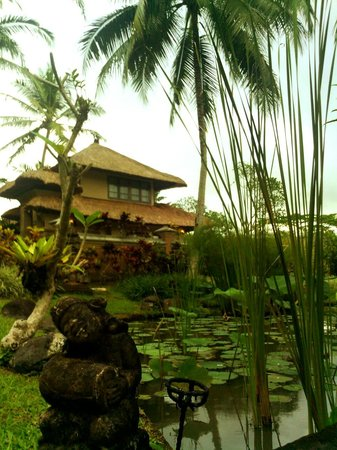 Villa Semana : fish ponds everywhere