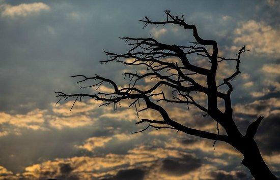 Ugur Pansiyon: Nature