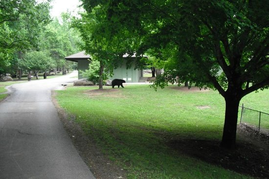 Bear sighting at Mynatt Park!