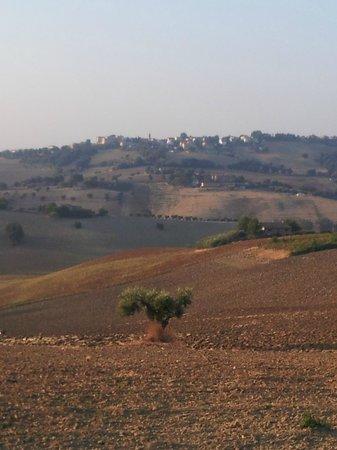 Agriturismo I Ciliegi del Checco: Le colline di San Marcello