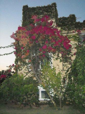 Villa Fleria Seaside Studios & Apts: Αναρριχητικά φυτά καλύπτουν τις εξωτερικές επιφάνειες του ξενοδοχείου!