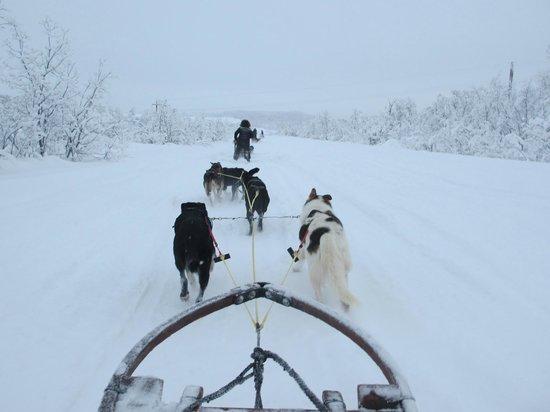 Hotel Arctic Eden : Husky Sledging near Kiruna